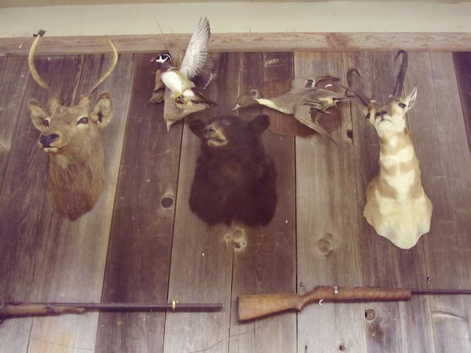 Friday Night Auction taxidermy