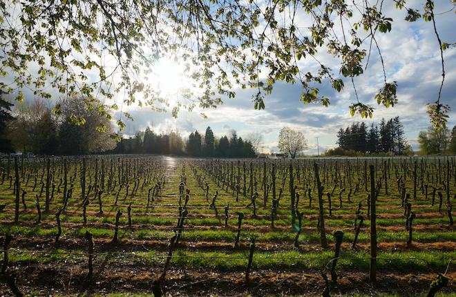 edgefield winery portland