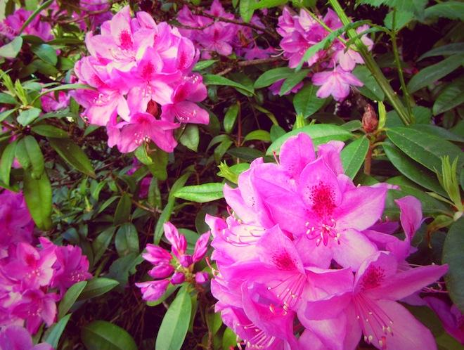 flowers portland6