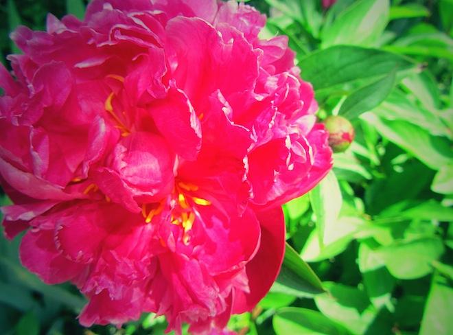 flowers portland2