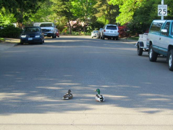 road ducks portland