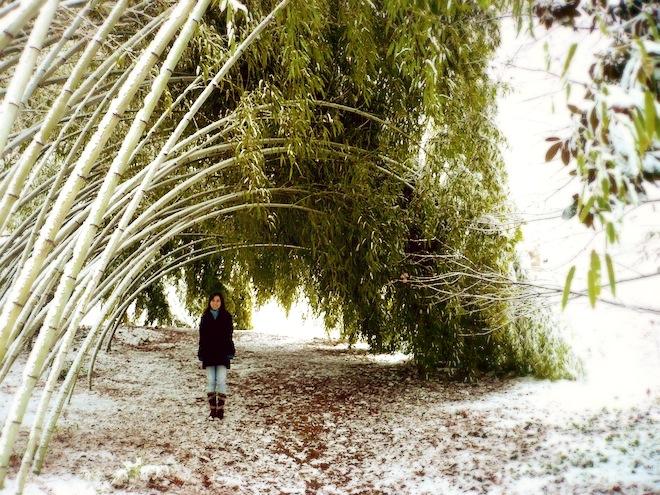 duke gardens durham snow5