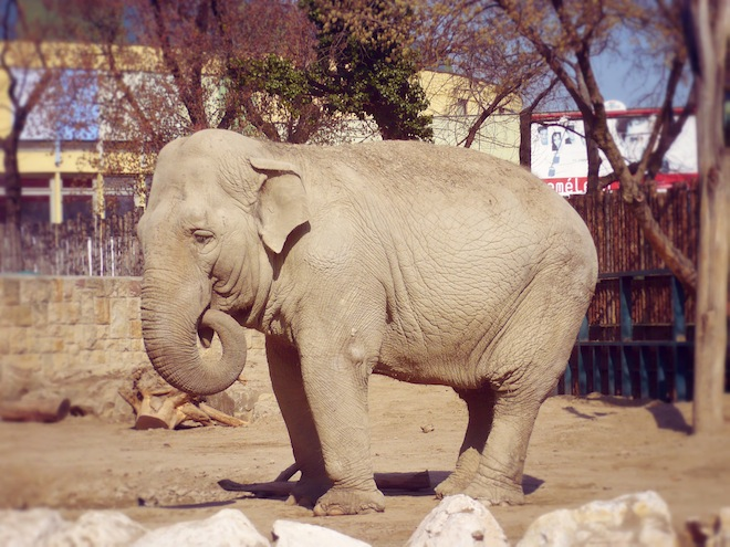 budapest hungary elephant