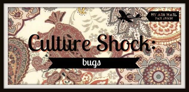 culture shock bugs