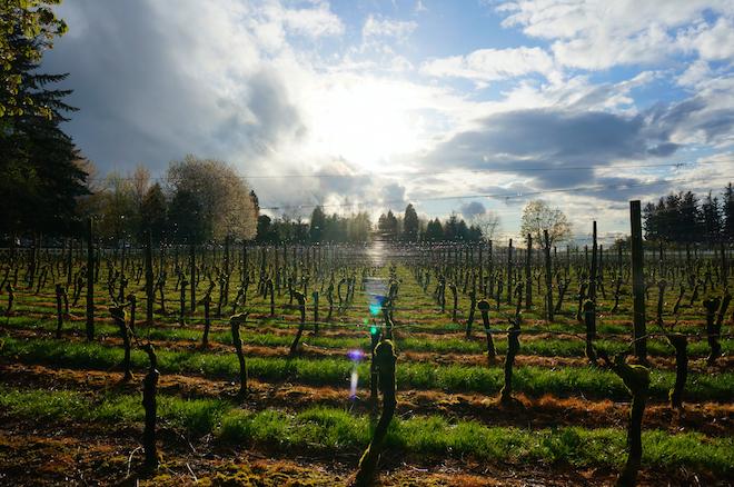 edgefield winery11
