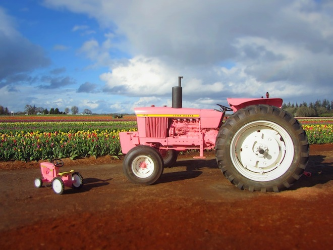 tulip farm oregon tractor