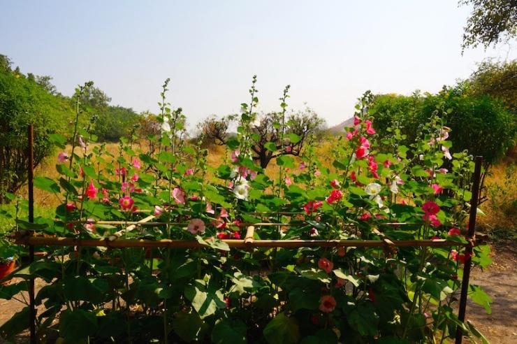 Meherazad flowers