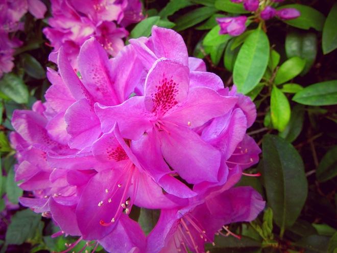 flowers portland5