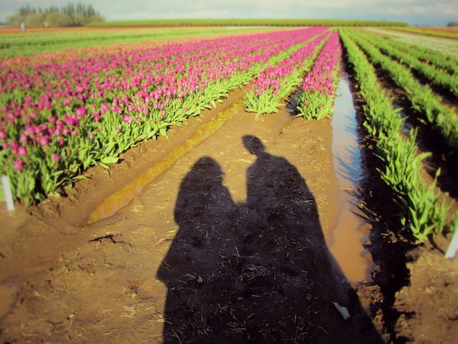 tulip farm oregon shadows