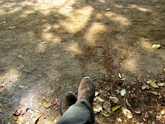 feet josh india