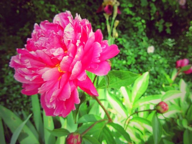 flowers portland3