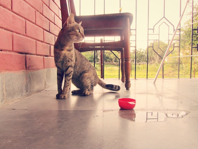 kitty6