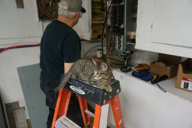 Kitty thinking about becoming an electrician?