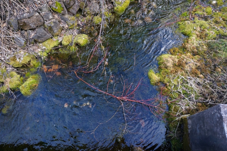 crimson-trail-logancanyon-utah63