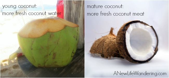 young vs mature coconut
