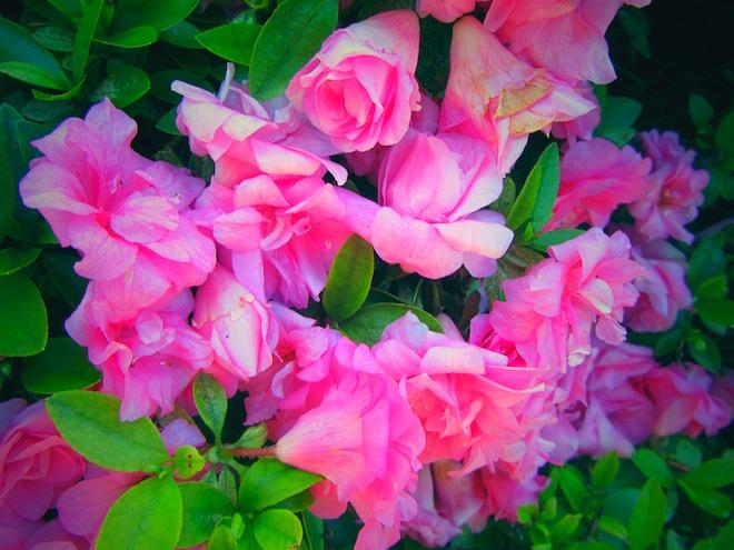 flowers portland1