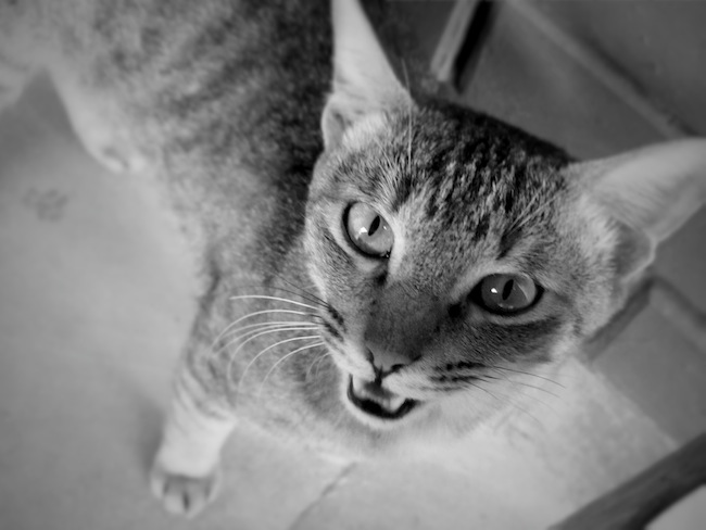 kitty18