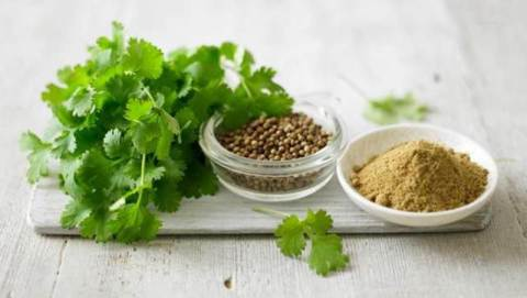 Difference Between Coriander and Cilantro