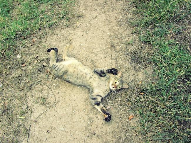 Our outdoor wild cat.