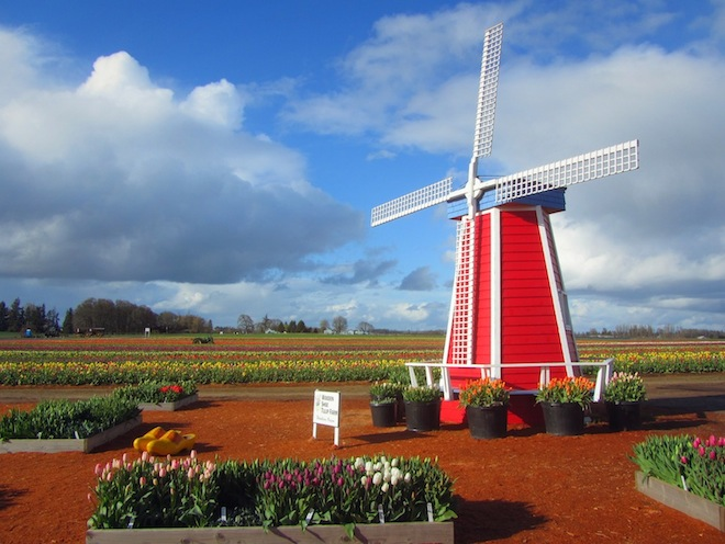 tulip farm oregon windmill