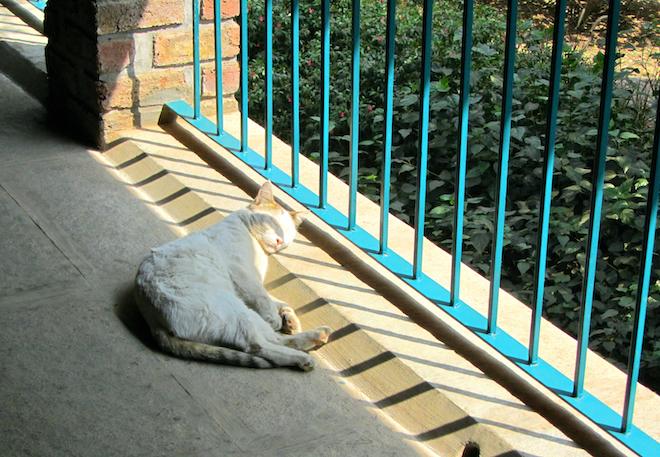 mpr india cat