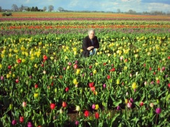 tulip farm oregon josh2