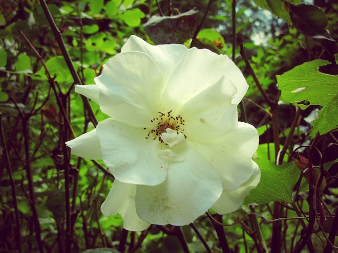flowers portland10