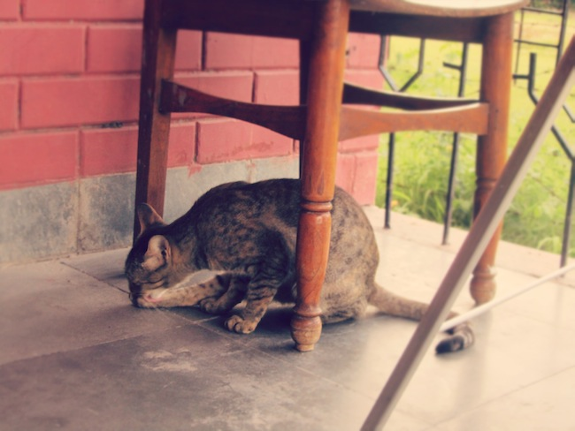 kitty14