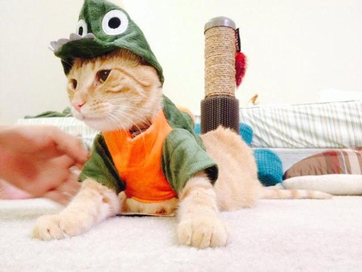 Cubby dinosaur!
