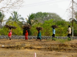 india street farmers